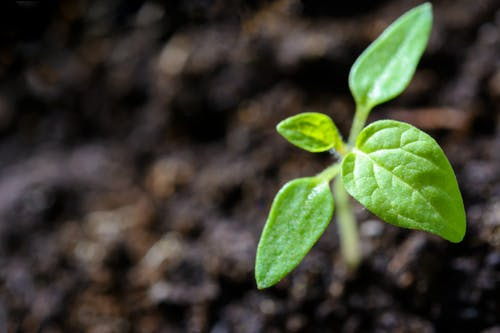 młoda roślina