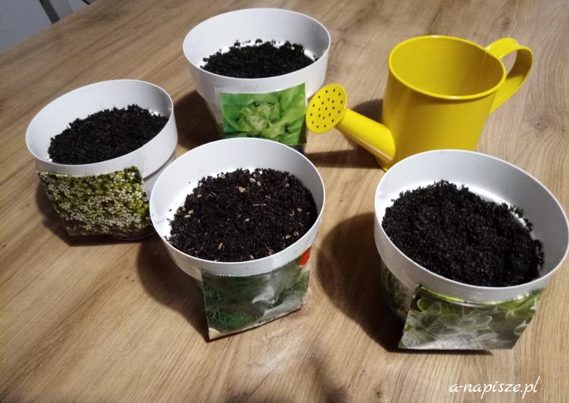 nowe zioła w doniczkach