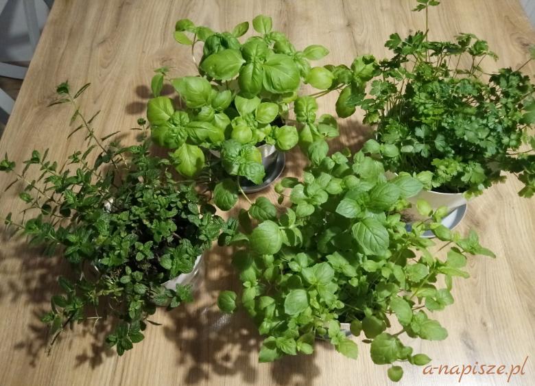 własne zioła w doniczkach
