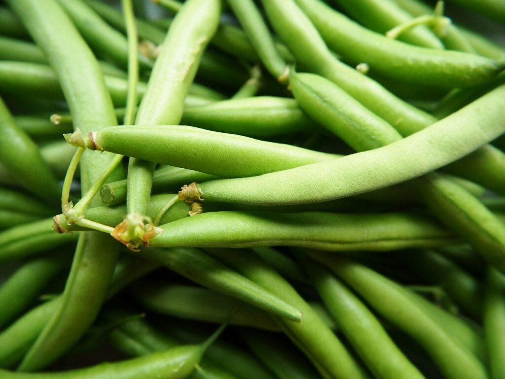 rośliny strączkowe fasolka szparagowa