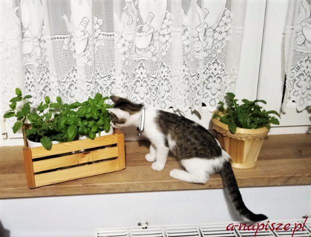 zioła dla kota doniczki