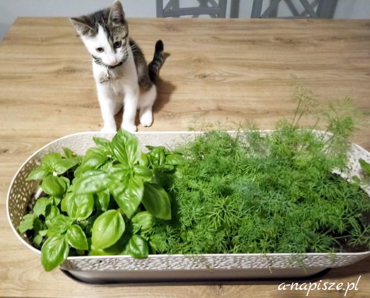 zioła dla kota
