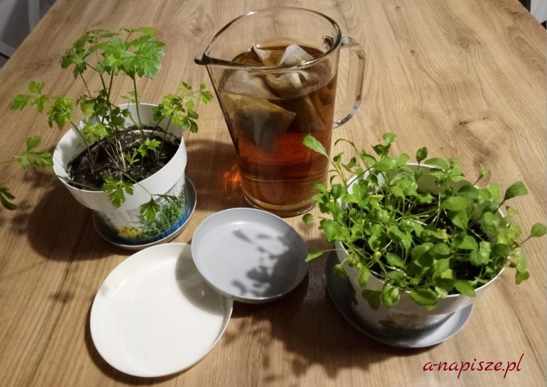 napar z rumianku i zioła