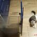 szafka i kot w kuchni