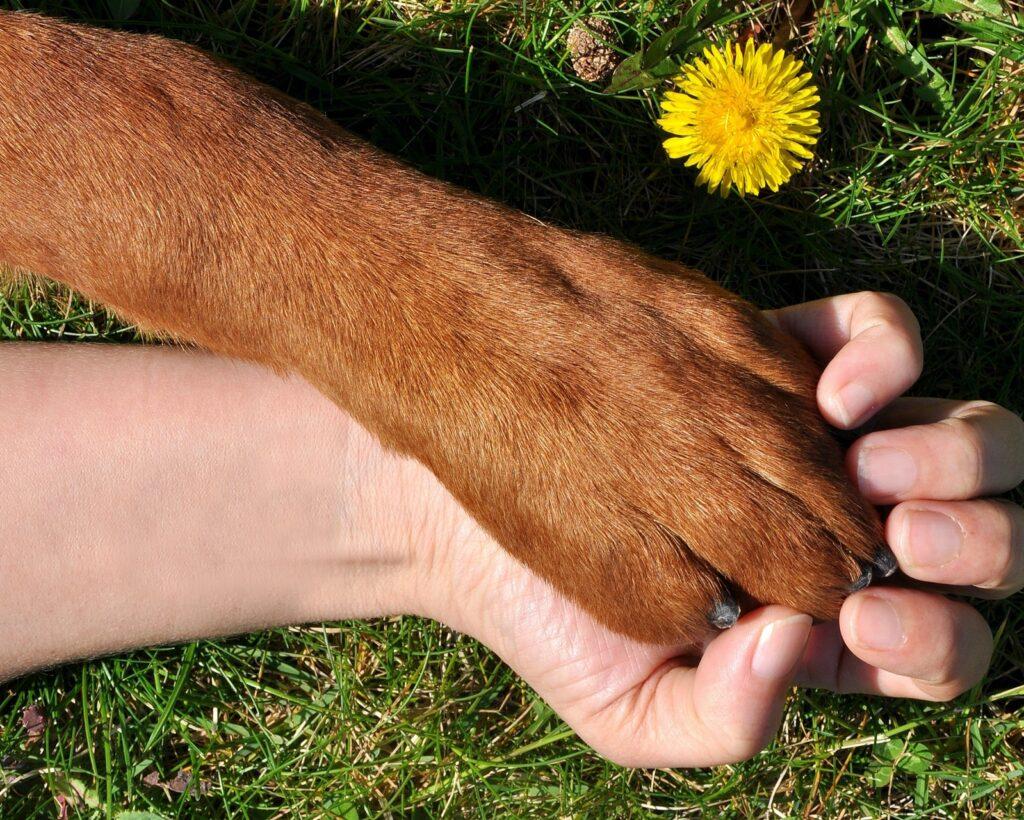potrzeba przytulania zwierząt