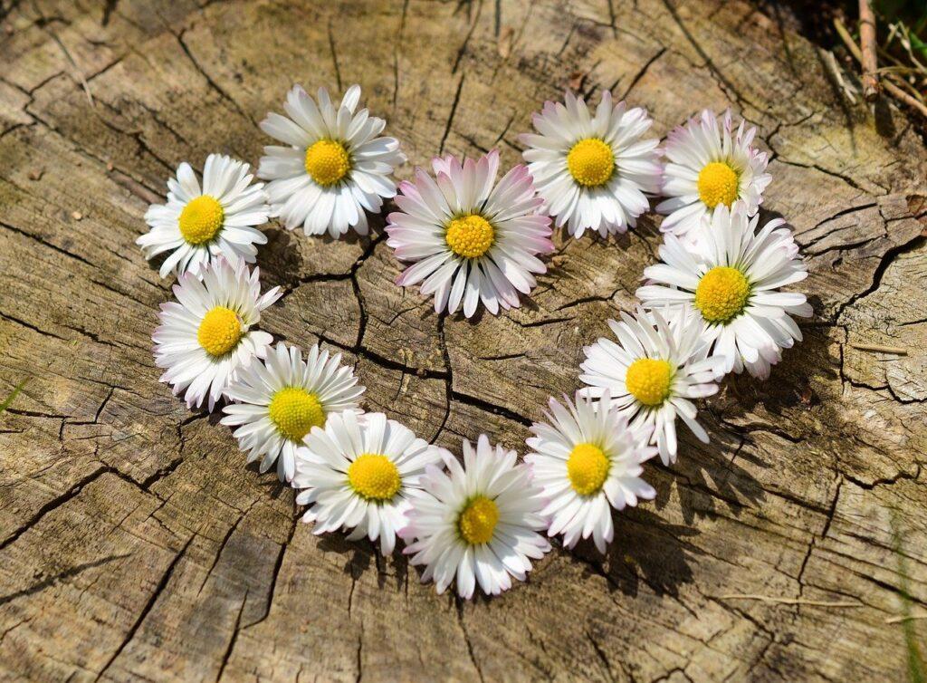polne kwiaty od serca