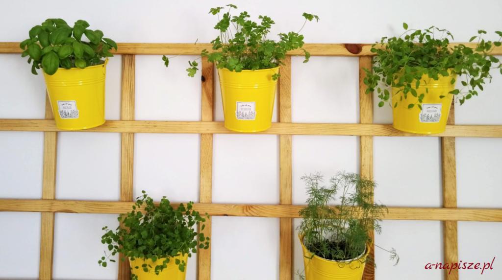 świeże zioła w doniczkach
