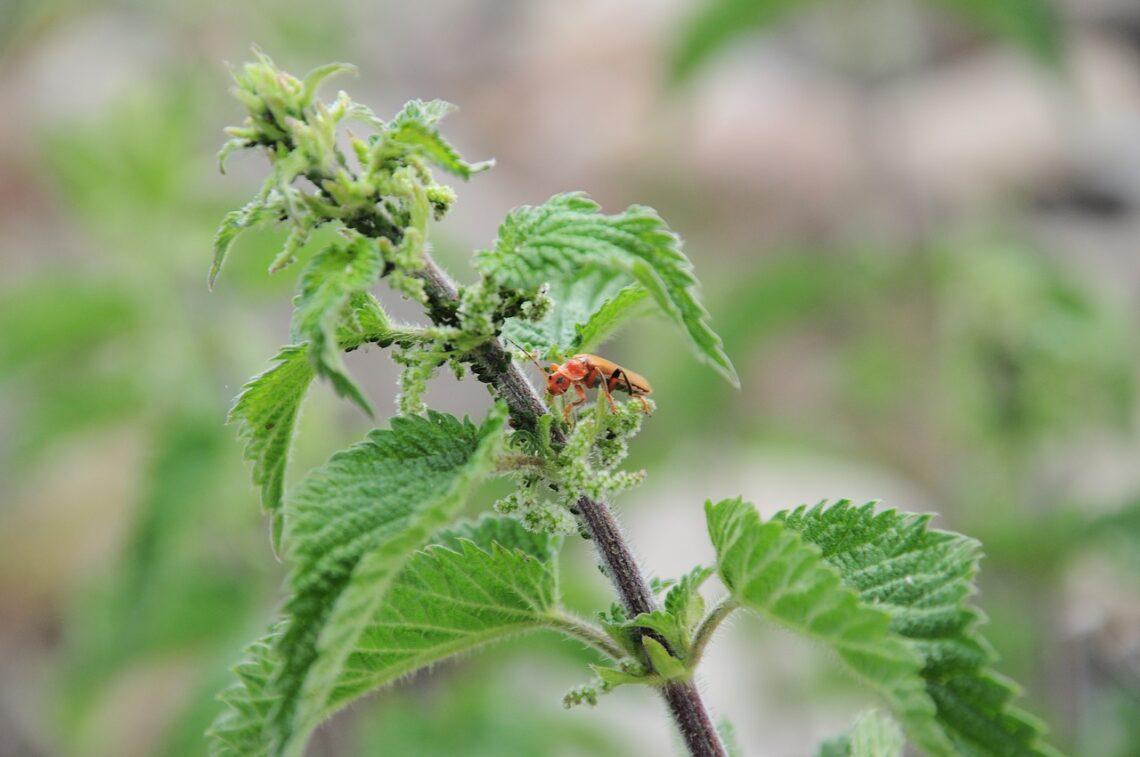 chwasty w walce ze szkodnikami roślin